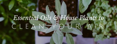 plants and oils